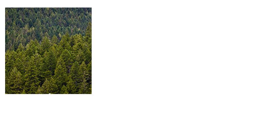 duggie-Trail
